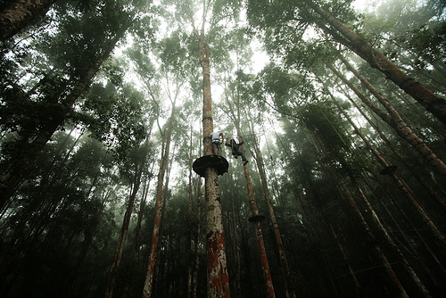 Tempat Wisata Di Bandung Treetop Adventure Park Lembang