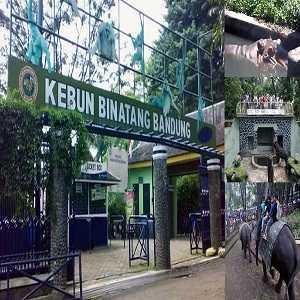 Tempat Wisata Anak di Bandung -Kebun Binatang Bandung