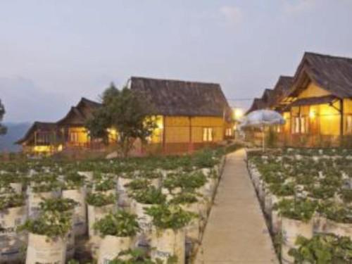 Saung Gawir Ciwidey Bungalow