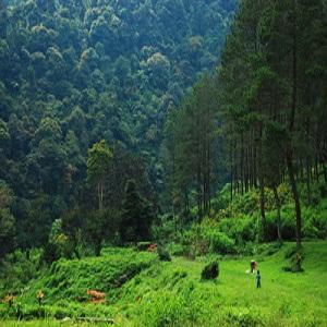 Wisata Alam Bandung Gunung Puntang