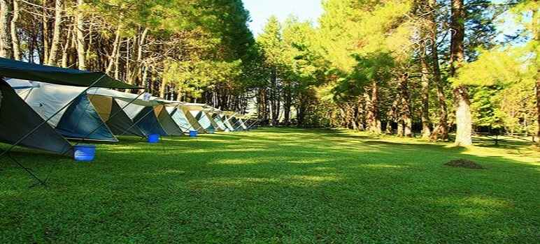 Wisata Pine Forest Camp Lembang