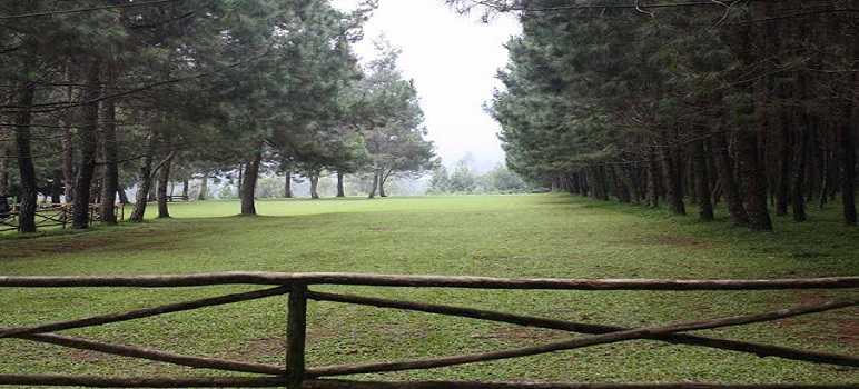 Sejarah Pine Forest Camp Lembang