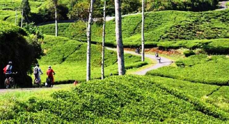 Gambar Kebun Teh Di Ciwidey Inilah 6 Kebun Teh Di Bandung Paling Terkenal Dan Eksotis