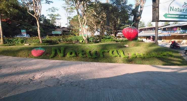 Natural Resto And Strawberry Land Lembang