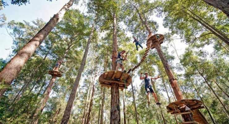 Harga Tiket Masuk Bandung Treetop Adventure Park