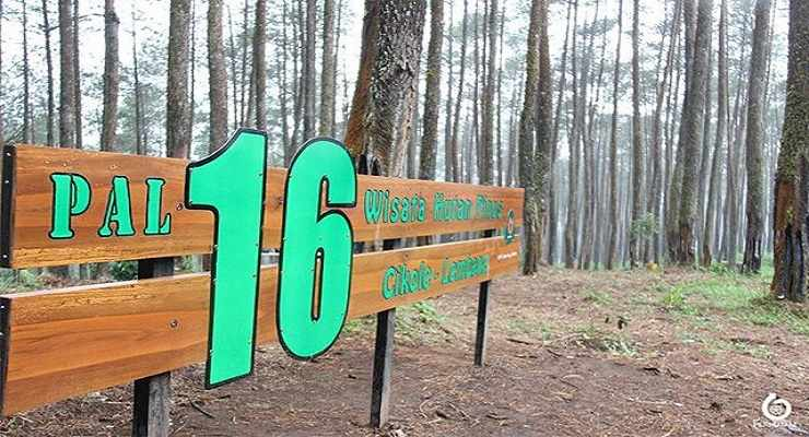 Wisata Hutan Pinus Cikole Lembang PAL 16