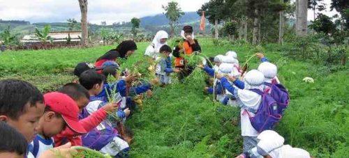 Little Farmers Lembang Bandung