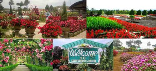 Harga Tiket Masuk Taman Begonia Lembang Bandung Terbaru
