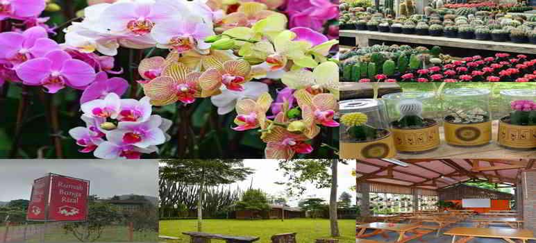 Tempat Wisata di Cimahi Rumah Bunga Rizal