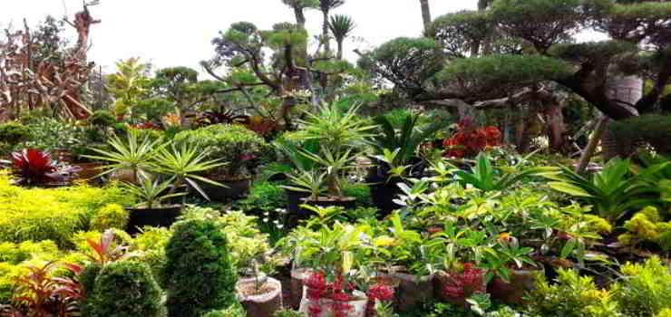 Taman Bunga Cihideung Cimahi Lembang Bandung
