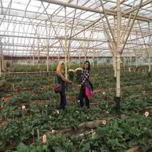 Koleksi Bunga di Grace Rose Farm Lembang Bandung