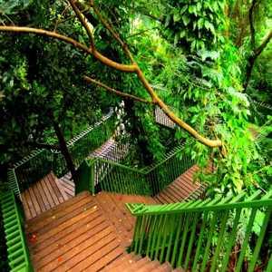 Forest Walk di Babakan Siliwangi Kota Bandung