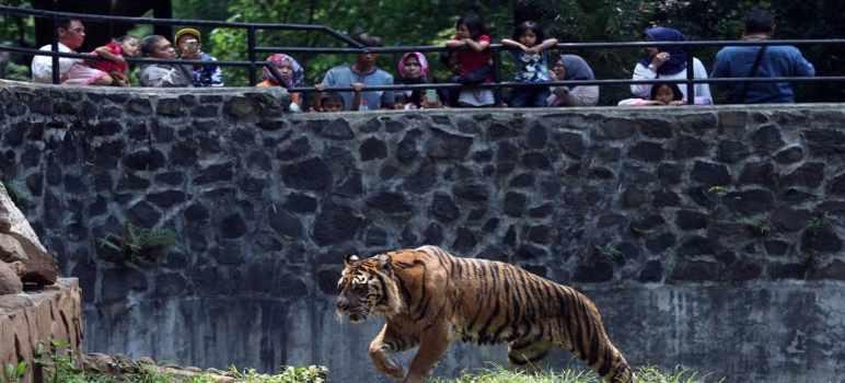 Tiket Masuk Kebun Binatang Bandung Terbaru 2020 Full Review