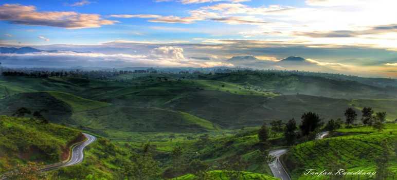 Kebun Teh Cukul Pangalengan Bandung