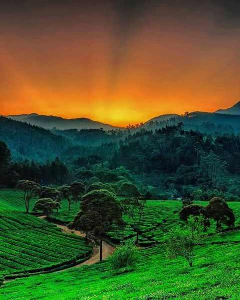 Hutan Pinus Rahong Pangalengan Bandung