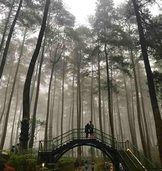 Fasilitas Orchid Forest Lembang Bandung