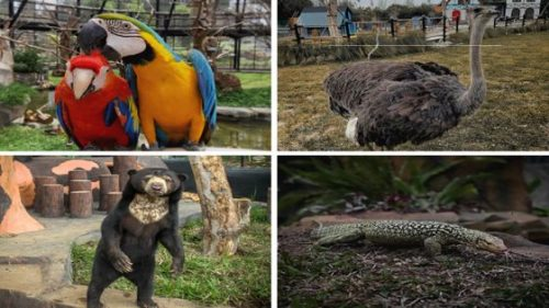 Koleksi Satwa Kebun Binatang Lembang Park & Zoo Bandung