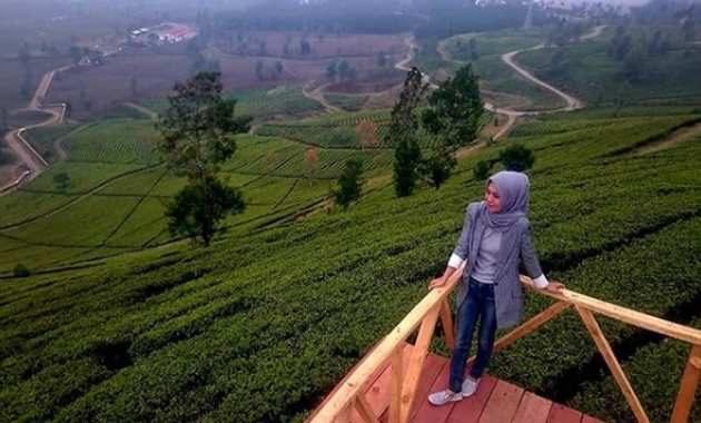 Perkebunan Teh Wayang Windu Pangalengan Bandung Selatan