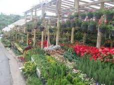 Taman Bunga Cihideung Lembang